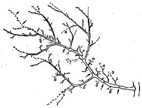 Обрезка яблони с ослабевшим