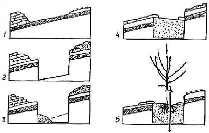 Как сажать деревья на склонах